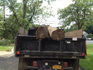 tree removal in northern NJ