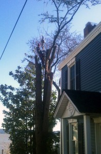 Tree removal services Lower NY State