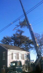tree removal in Westchester County NY